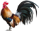 Chicken_Champ's avatar