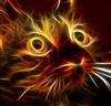 Ninjacat509's avatar
