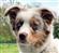 Doggonit's avatar