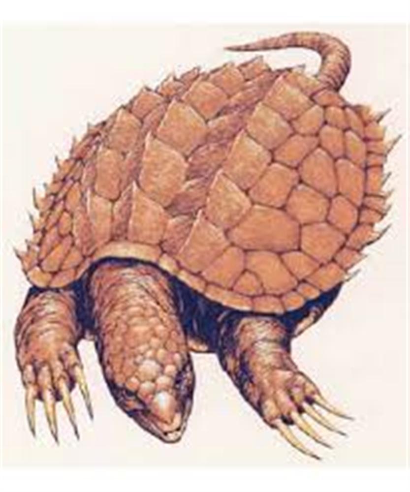 Giant Turtle Dnd Wwwtollebildcom