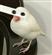 rypolardisorder's avatar