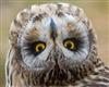 Bill_Poole's avatar