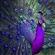SkrubKing's avatar