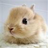 abunny's avatar