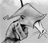 Lomas's avatar