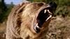 Griz_Behr's avatar