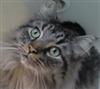 TrenetFirehawk4729's avatar