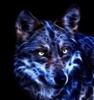 MamaWolf's avatar