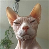 AaronOfBarbaria's avatar